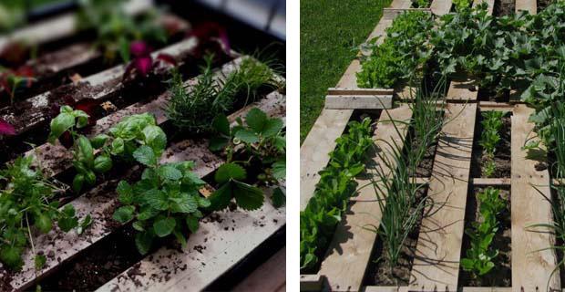 Riciclo creativo pallet - Come realizzare un giardino verticale ...